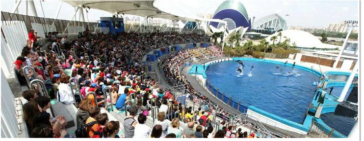 A dolphin show at L'Oceanografic
