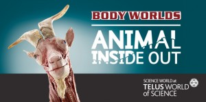 Animal Inside Out @ Science World at TELUS World of Science | Vancouver | British Columbia | Canada