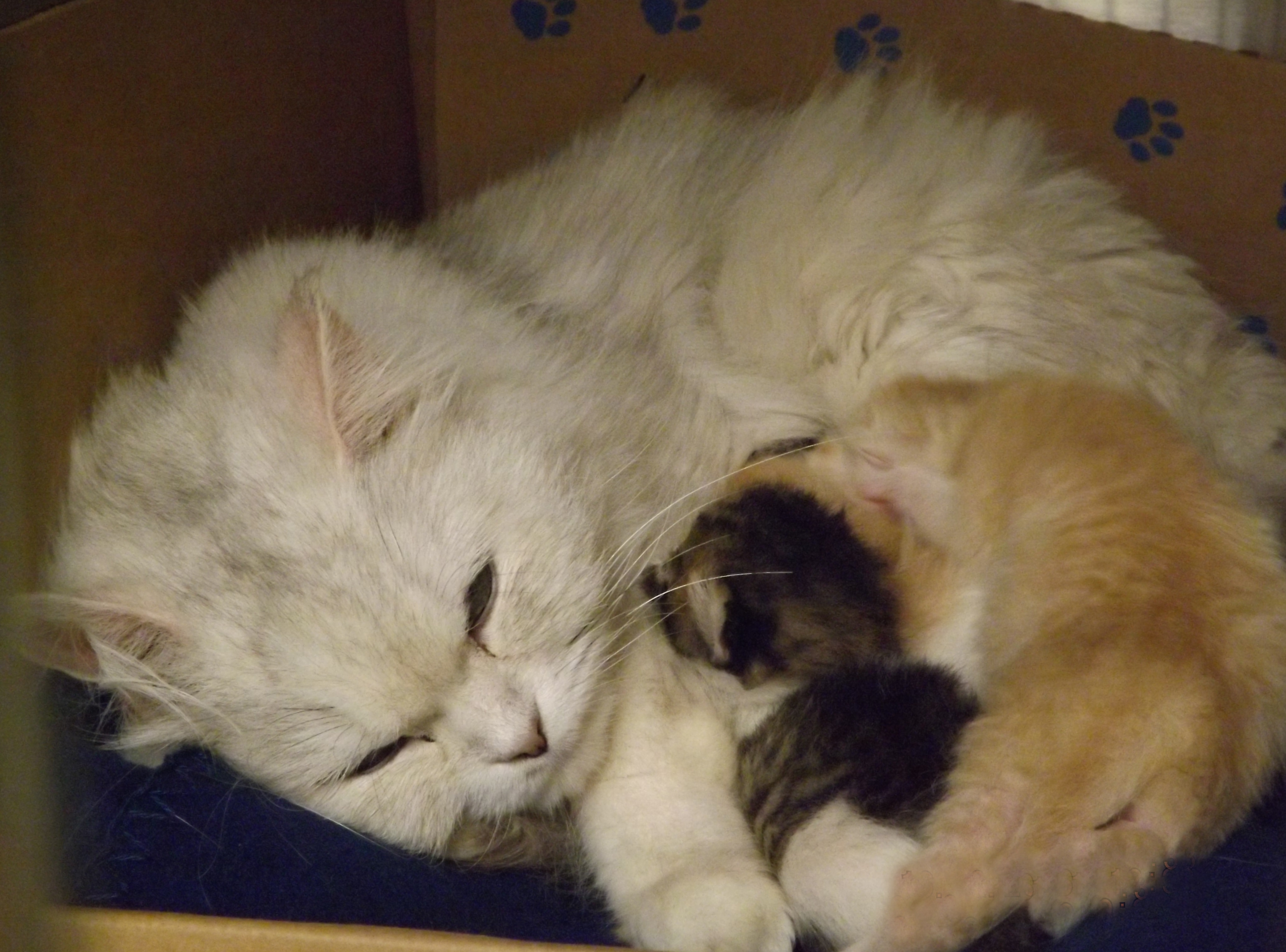 New protections for BC cats, dogs in wake of animal abuse cases