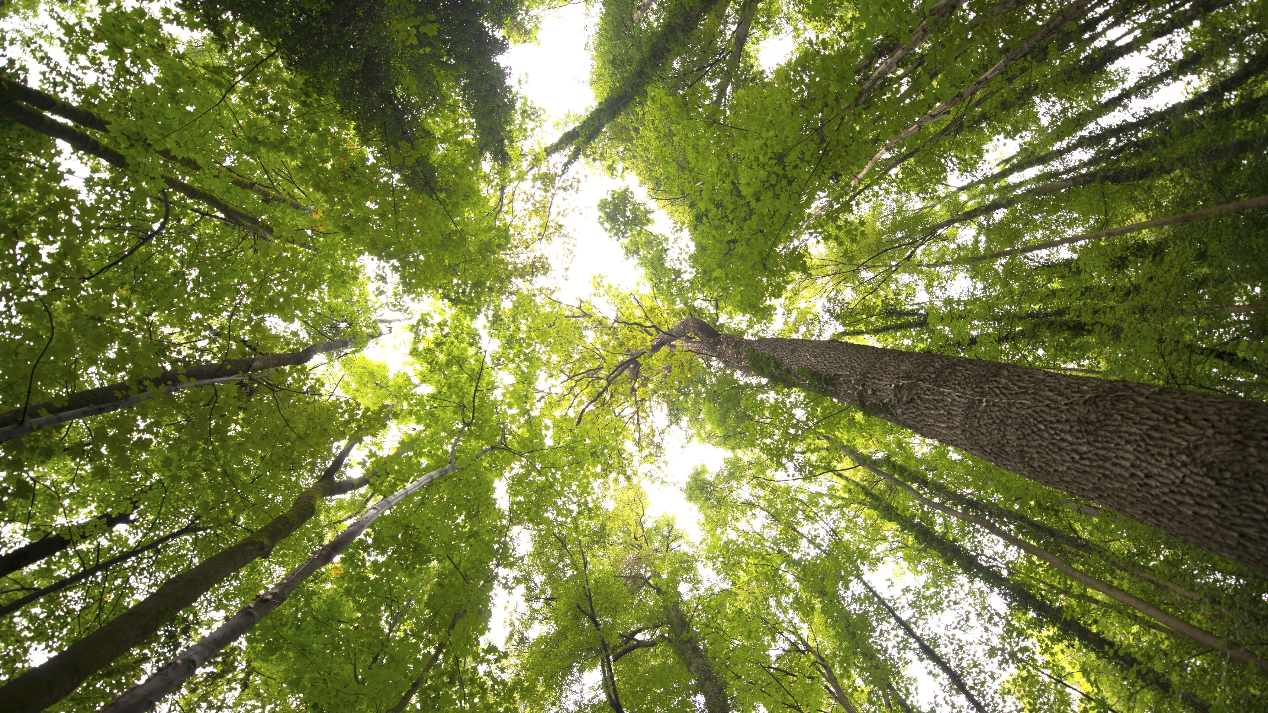 Vancouver aims to improve tree canopy with cheap deals for Canopy of trees