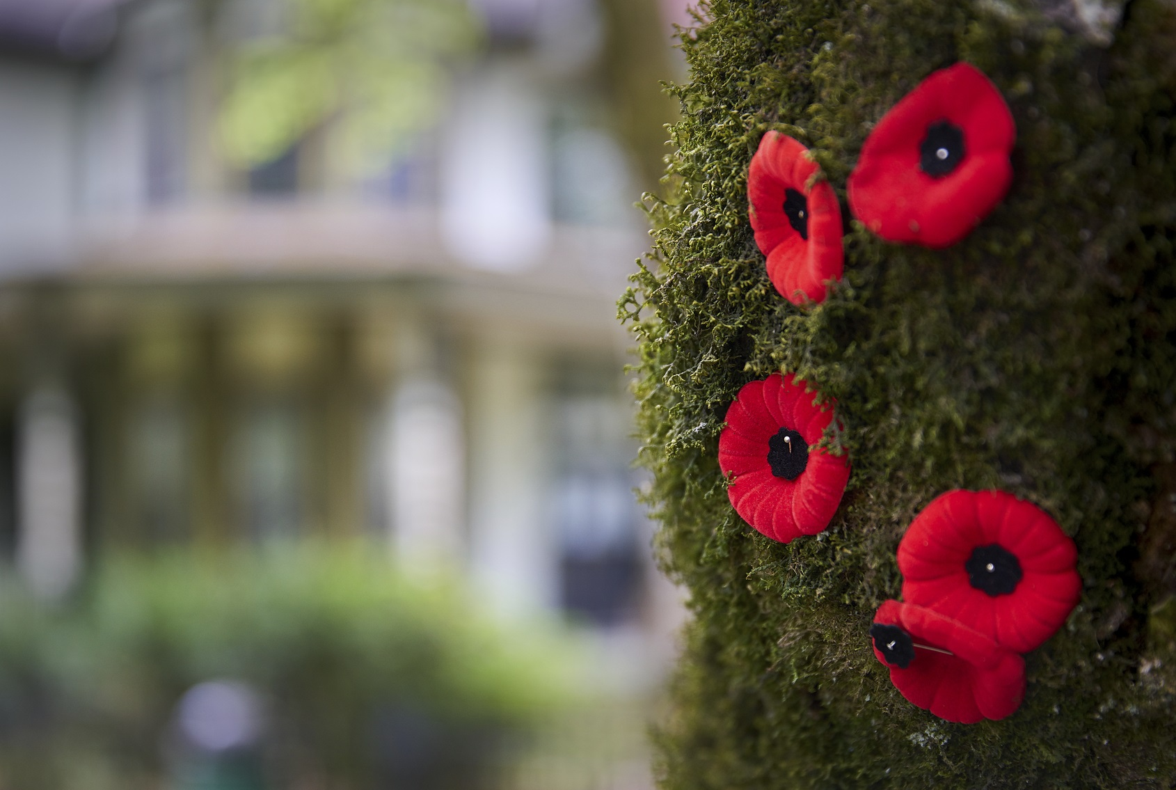 Poppy Etiquette Things To Know Ahead Of Remembrance Day News 1130