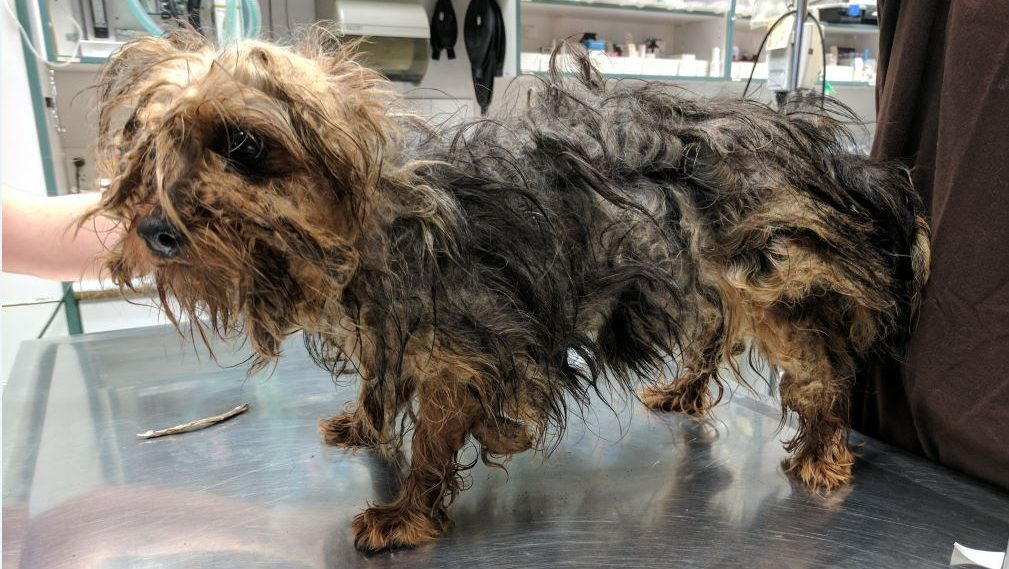 Seventeen neglected dogs removed from Vancouver Island breeder