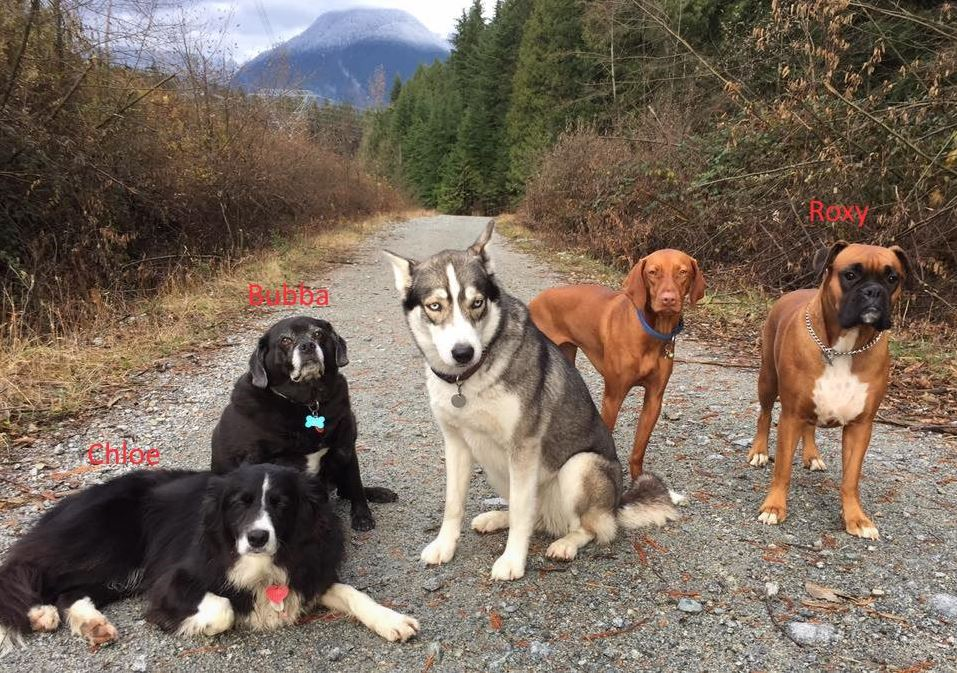 Chloe, Bubba and Roxy are the dogs Annette Poitras was walking when she disappeared on Monday, November 20th.