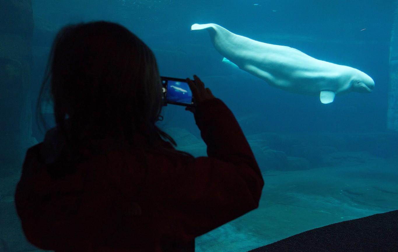 Vancouver Aquarium suing city and park board over millions lost after cetacean ban