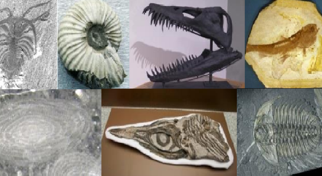 British Columbians asked to choose a fossil to represent the province - NEWS 1130