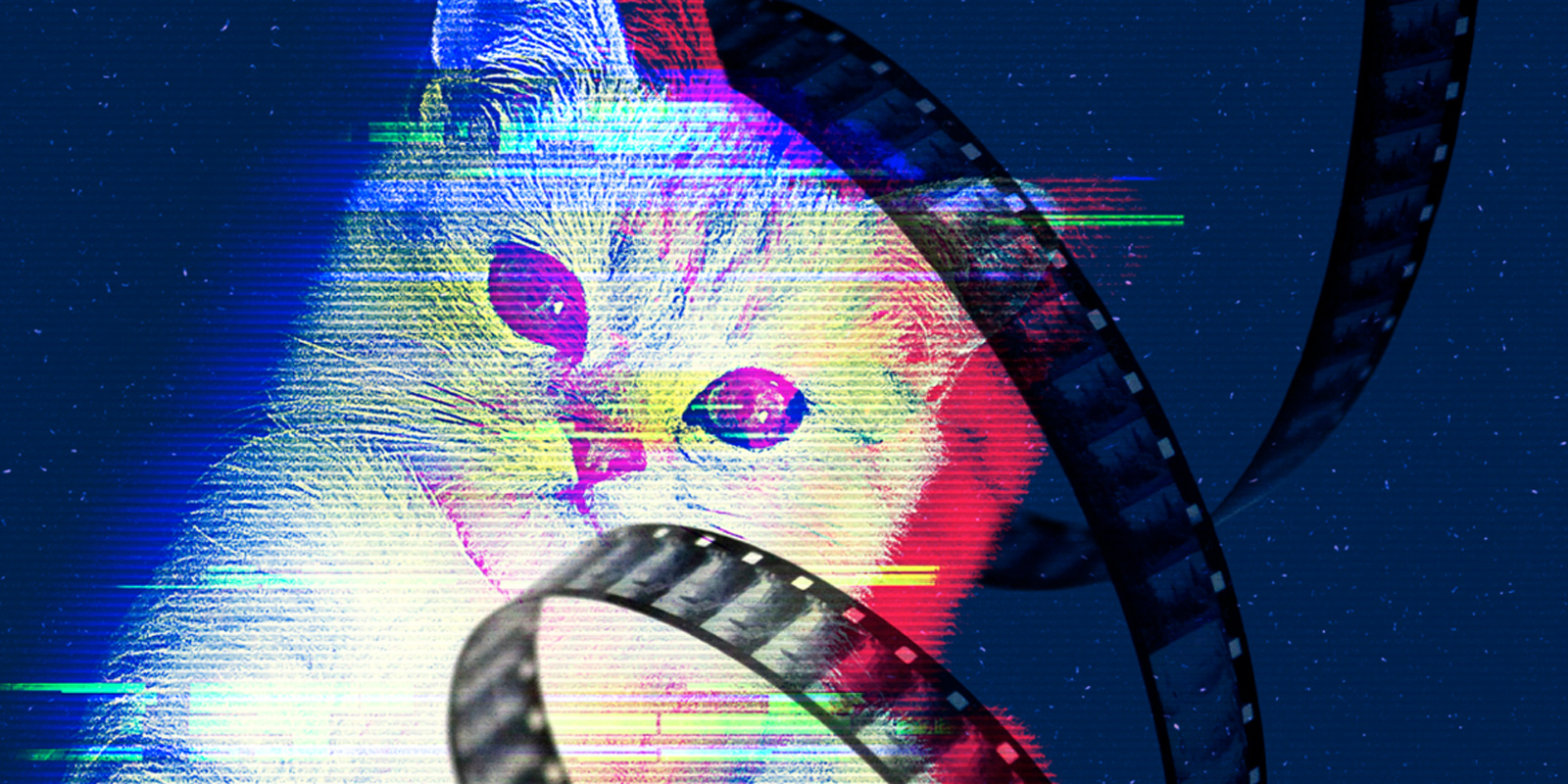CatVideoFest 2019 coming to Vancouver