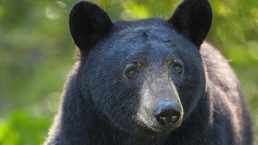 Coquitlam park entrance closed to keep people away from bears