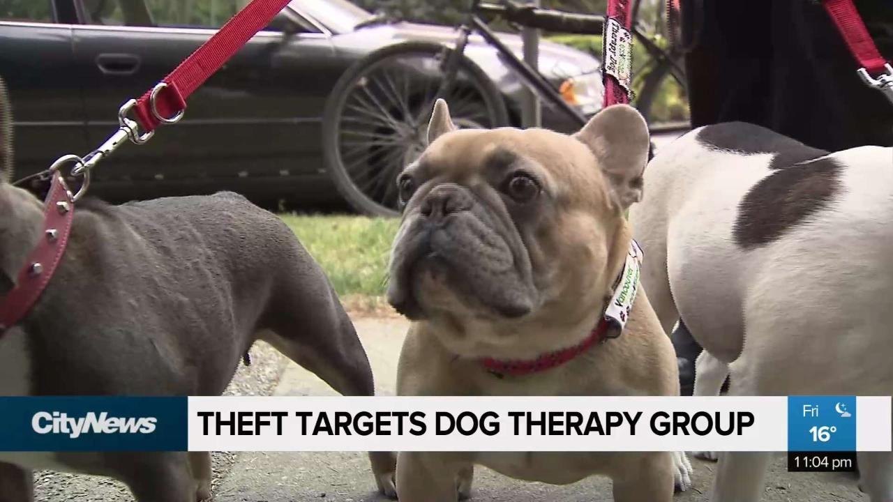 Theft targets dog therapy group
