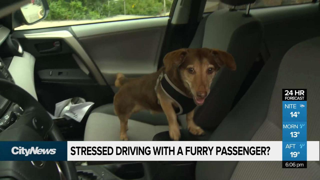 Can your dog make for a 'ruff' ride?