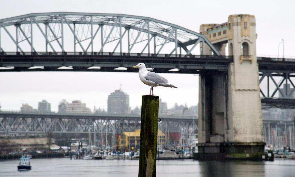 Climate activists prepare to block Vancouver's Burrard Bridge, dozens arrested in worldwide demonstrations