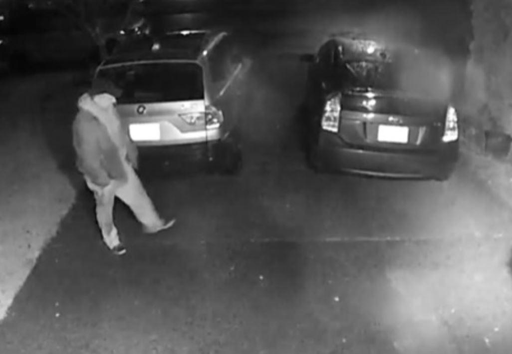 Man vandalizes 25 cars in Maple Ridge neighbourhood