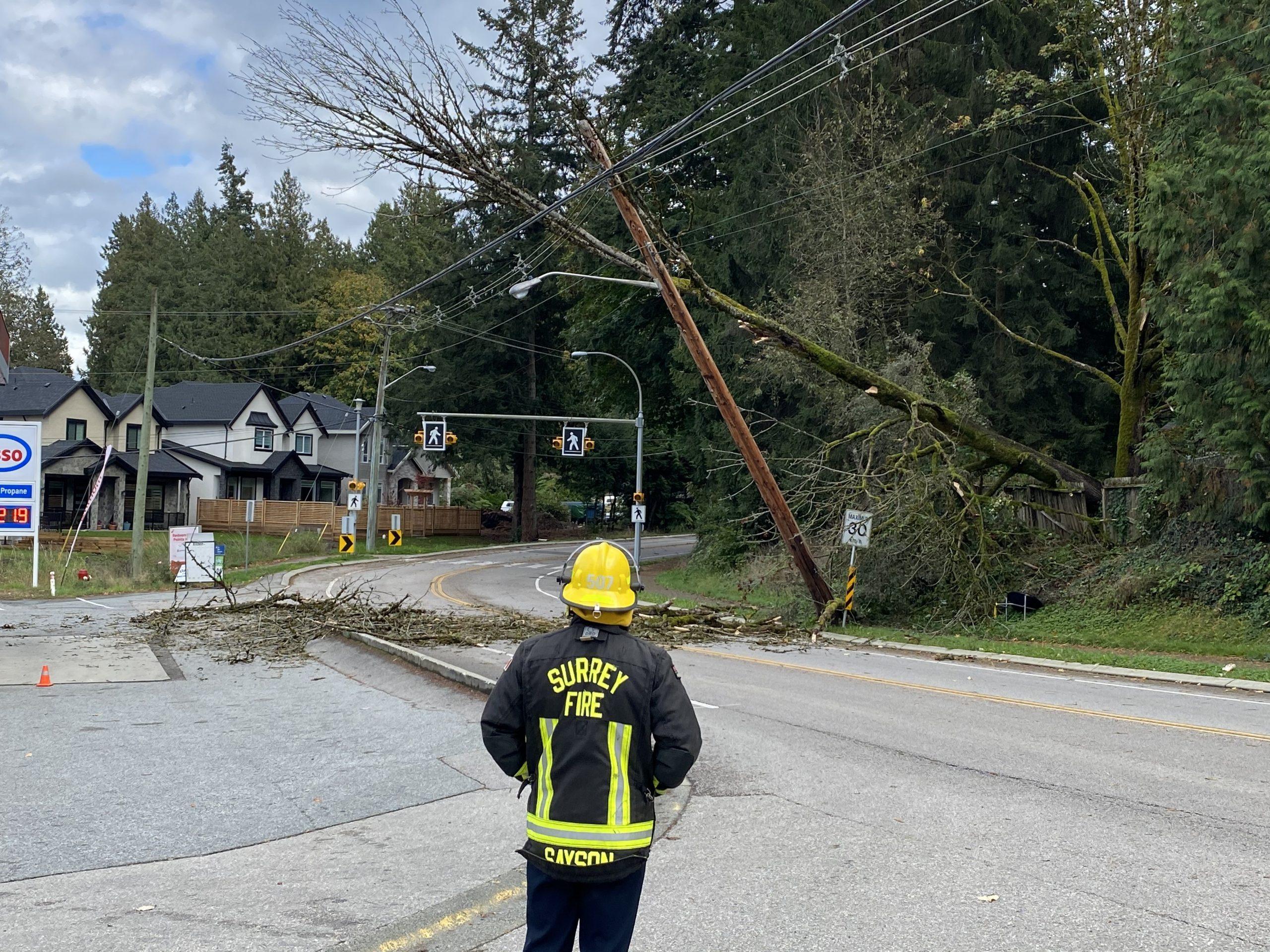 BC windstorm damage tree surrey crescent road